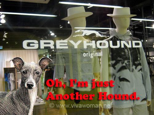 Bangkok: Greyhound is not just another hound